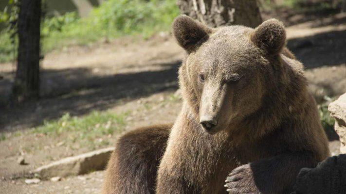 parc animalier des Pyrénées vacances Occitanie