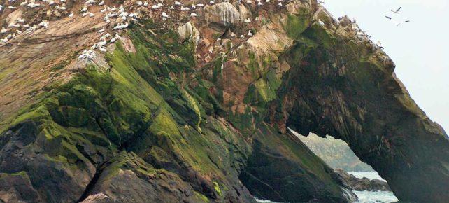 réserve naturelle des sept îles vacances en bretagne