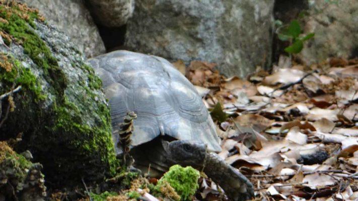 village de tortue à cupulatta en corse