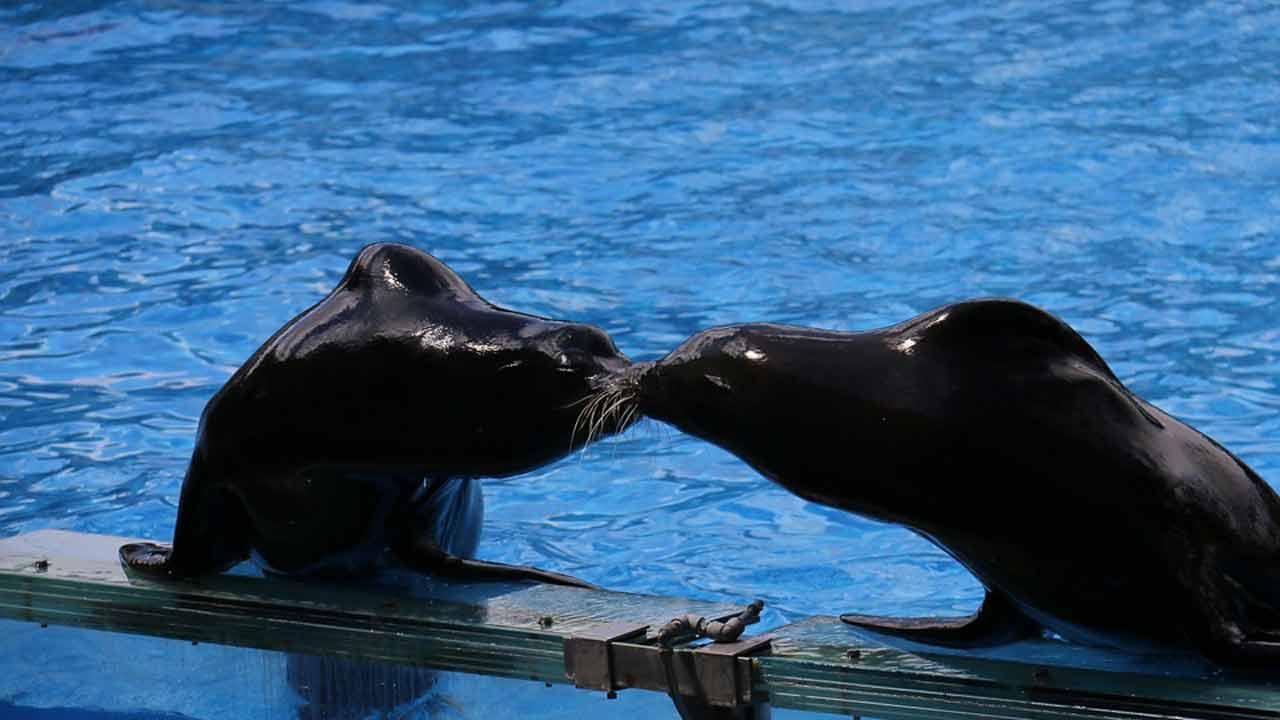 l'aquashow vacances en bretagne France
