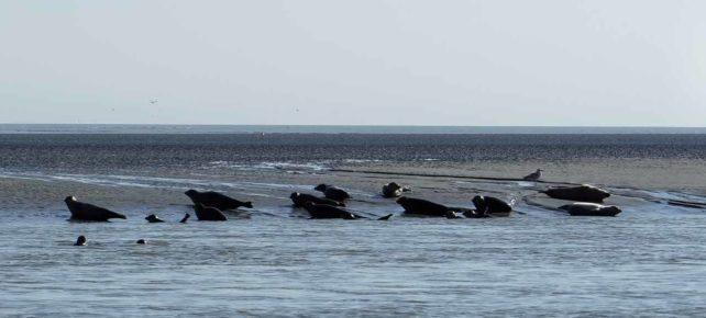 les phoques de la baie d