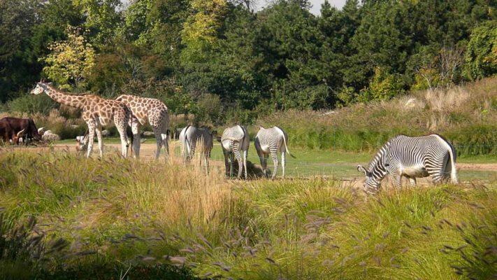 visite du parc animalier et botanique de banféré