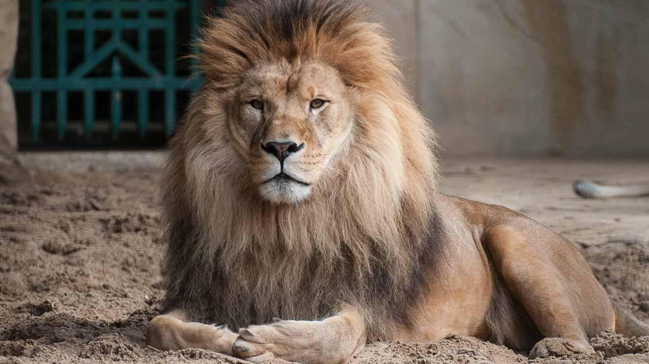 zoo de la Palmyre vacances aquitaine