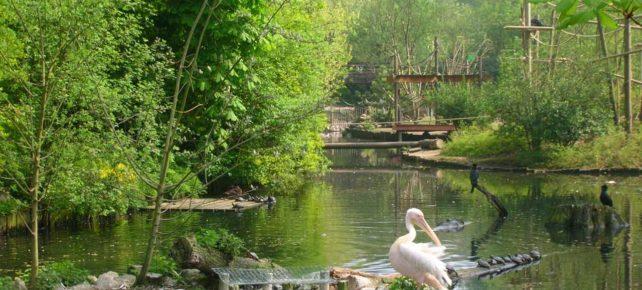 zoo de lille hauts de france séjour